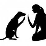 犬の「腸リンパ官拡張症」~最期まで頑張った愛犬を思い出して