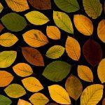 秋物の服がお目見え!最初がっかりその後超わくわく秋コーデ