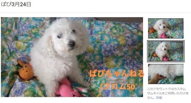 ぱぴちゃんねる3月24日,フロム50