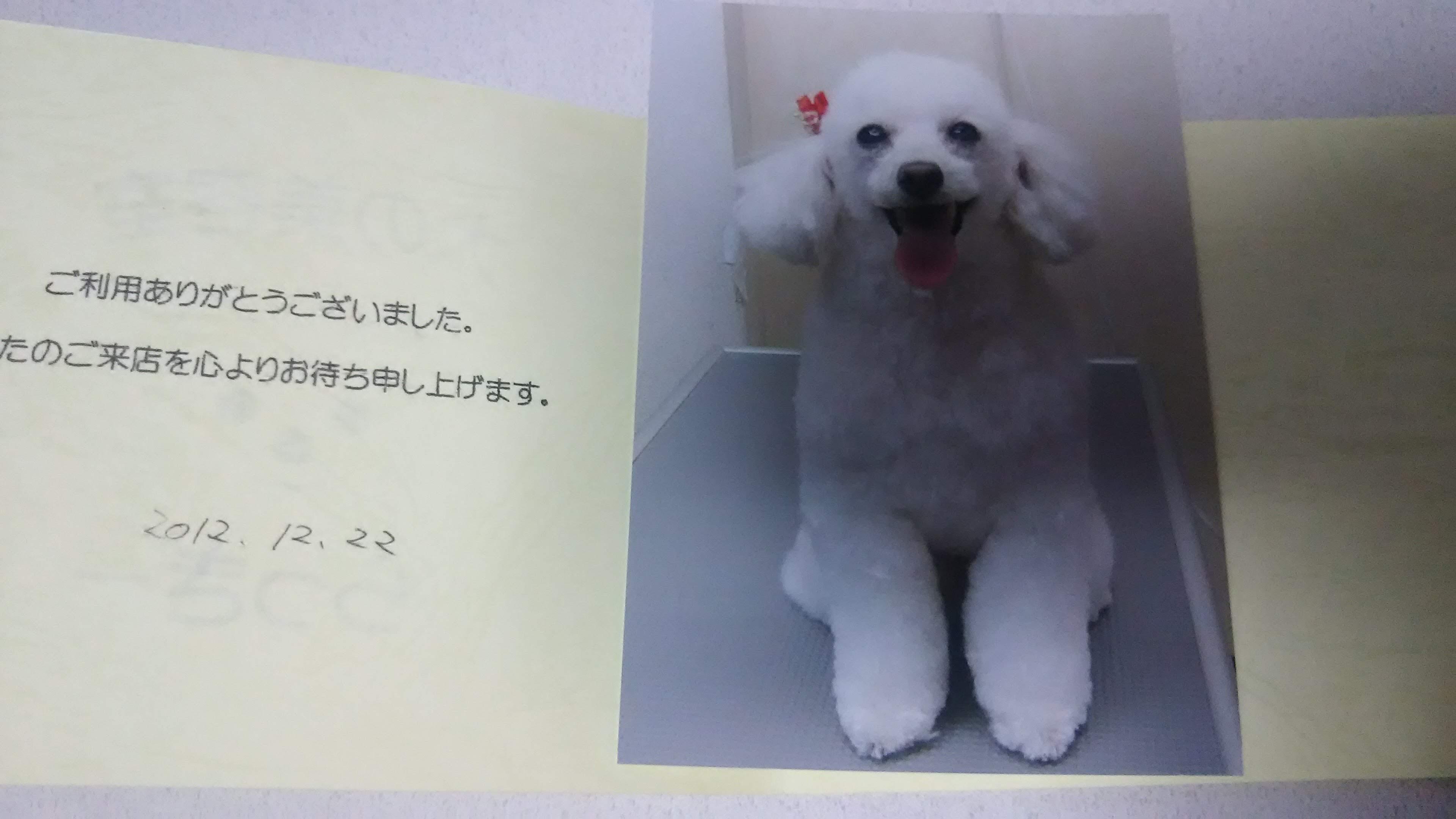 ぱーくん2012年12月,フロム50