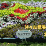 エアコン普及率の低い北海道!でも、札幌でペットを飼うならエアコン必要!