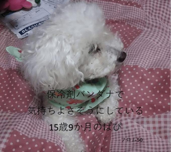 2018年8月3日のぱぴ,フロム50
