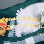 慢性腎不全の愛犬ぱぴが好きで人間も納得のペットベッドの特徴
