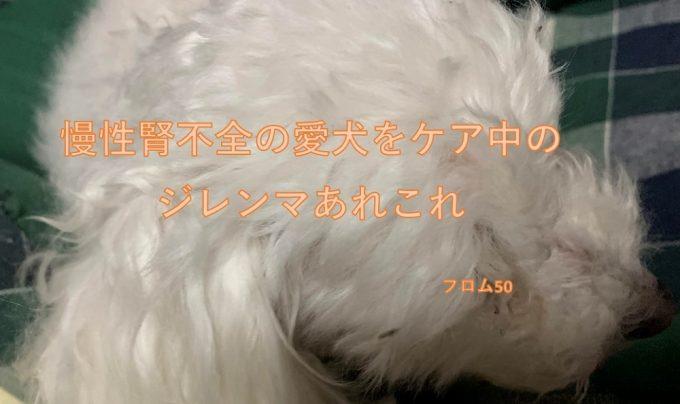 ぱぴ2月13日2019年,フロム50