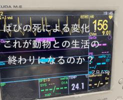 ぱぴの心電図,フロム50