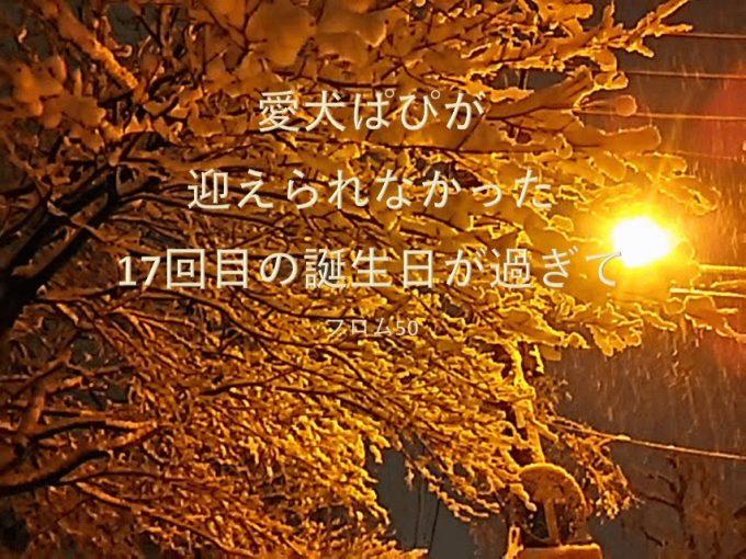 ぱぴのいないぱぴの誕生日,フロム50