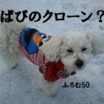 もしも2019年3月に旅立った愛犬ぱぴのクローンが作れたとしたらどうしたか?