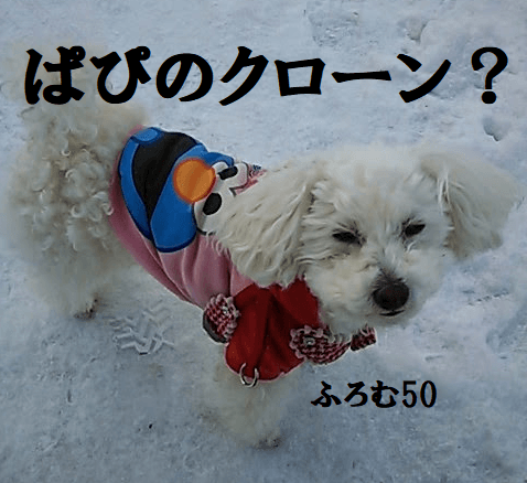 愛犬ぱぴのクローン?,ふろむ50