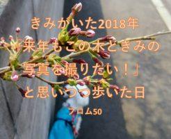 2018年桜の木の下のぱぴ