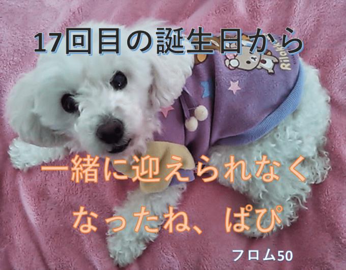 ぱぴがいない3回目の誕生日